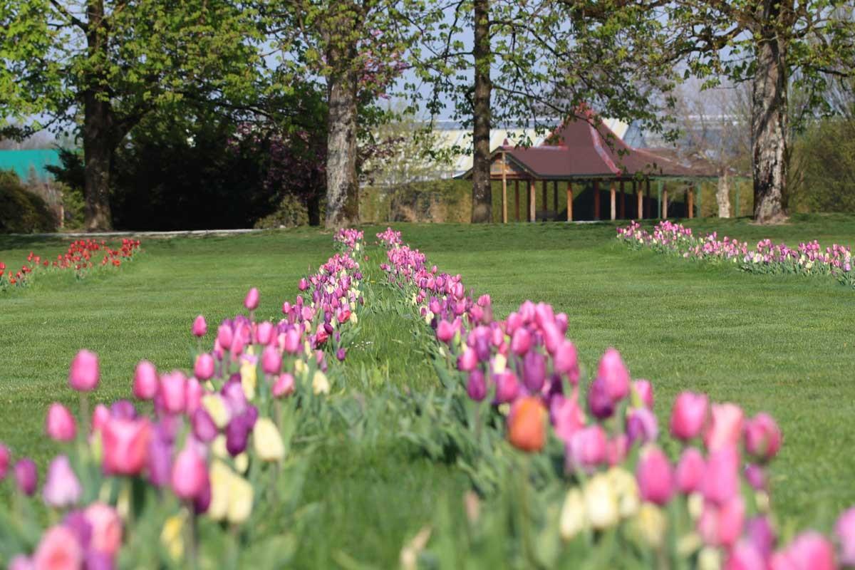 Letne vstopnice za Arboretum Volčji Potok